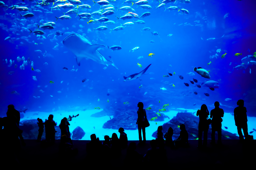 Aquarium Atlanta Georgia istock Small