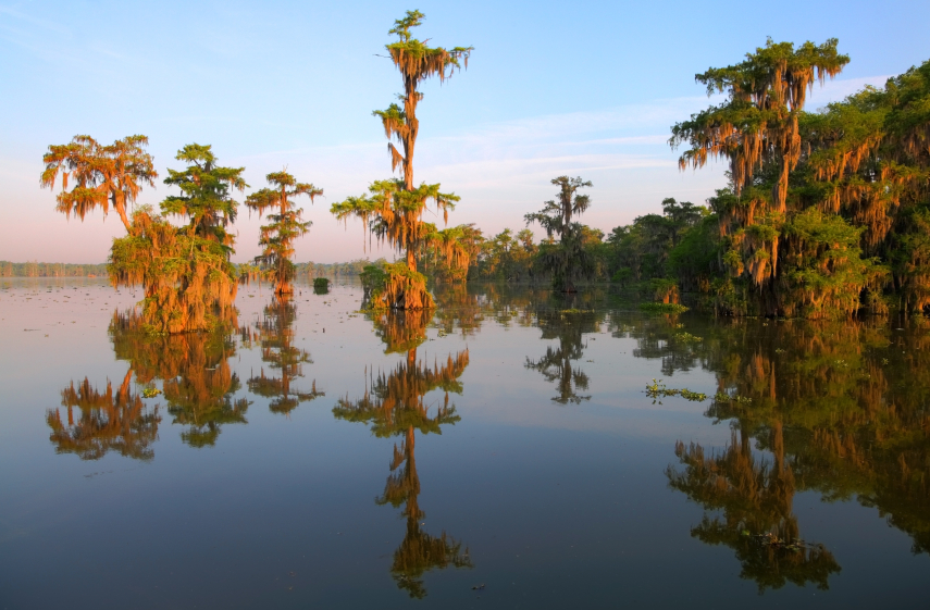 Louisiana Bayou - Lake Martin