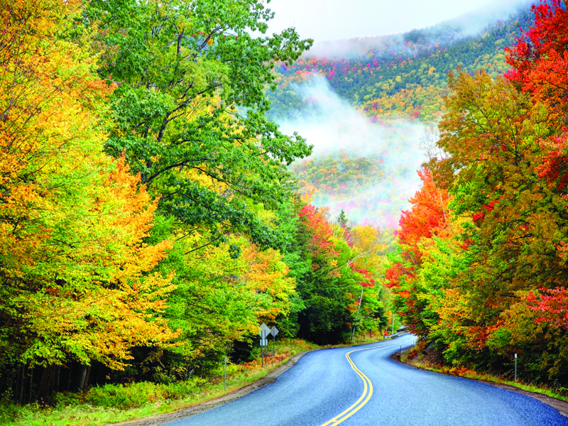 New England foliage photo 800 x 600