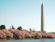 DC Monument Cherry_shutterstock_Thumbnail
